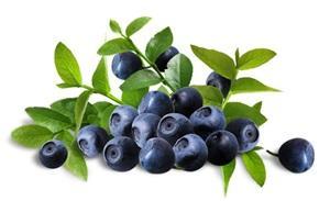 Bilberry1